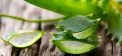 Léčivé účinky aloe vera - zázrak z přírody!